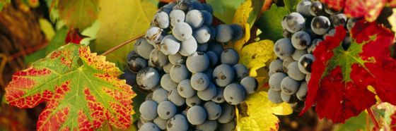 4 razones para tomar vinos de La Rioja española