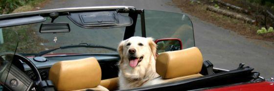 10 tips para viajes con mascotas por carretera
