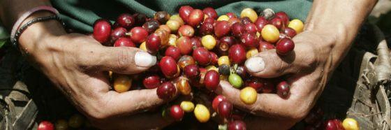 3 curiosidades sobre el café Antigua de Guatemala