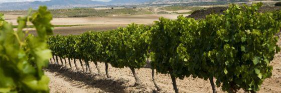 4 razones para enamorarse de los vinos de La Rioja marqués de cáceres