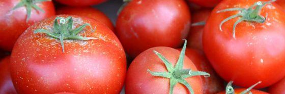 4 tips para disfrutar al máximo los tomates