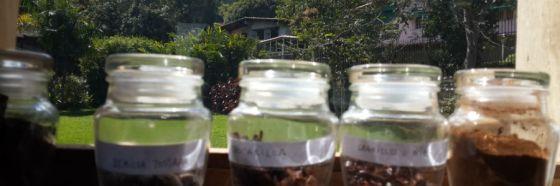 4 razones para conocer Cacao de Origen