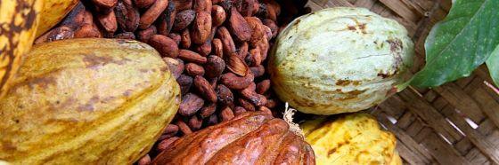 Feria del chocolate para celebrar los 20 años del SENIAT