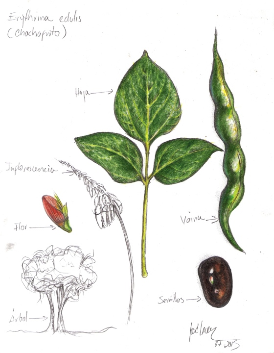 ilustracion chachafruto jose lacruz