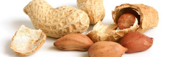 peanut legume