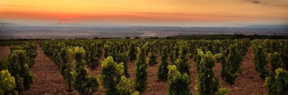 vineyard spain rioja dawn