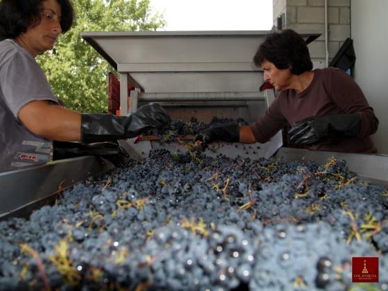 grape selection montalcino tuscany col dorcia