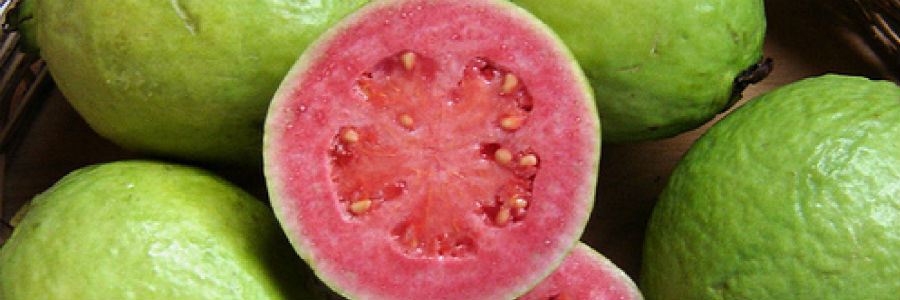 guava gastrobotanica rodrigo de la calle valentina inglessis