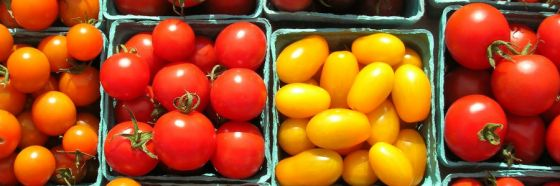 different breed tomatos