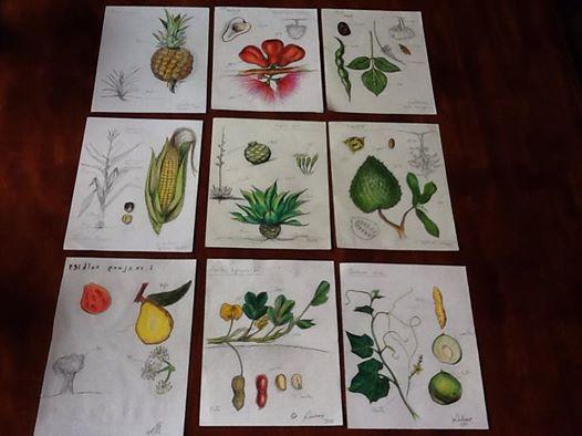 esnobgourmet_dibujos_vegetales_gastrobotanica