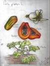 El olor de la papaya (Cuaderno gastrobotánico + apuntepersonal)