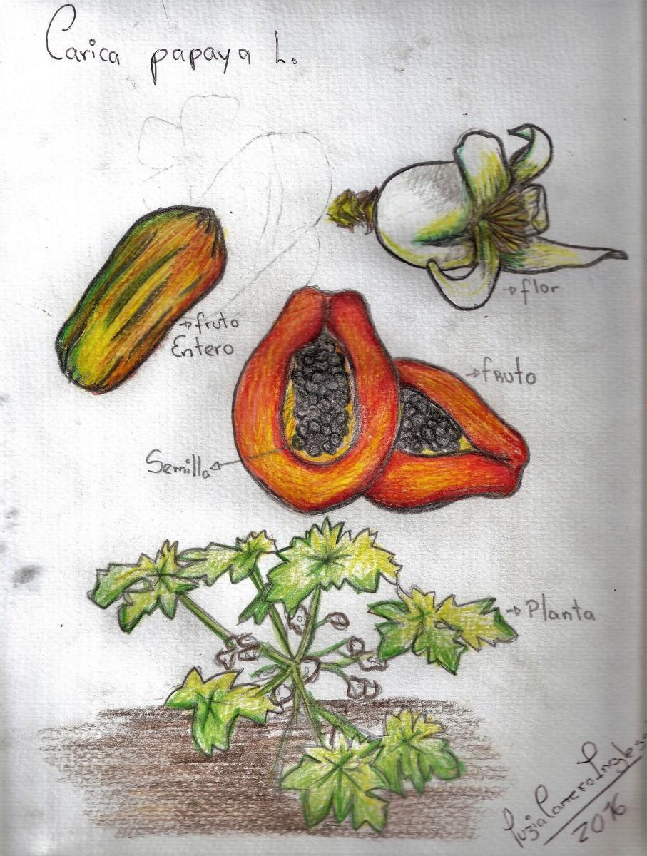 El olor de la papaya (Cuaderno gastrobotánico + apunte personal)