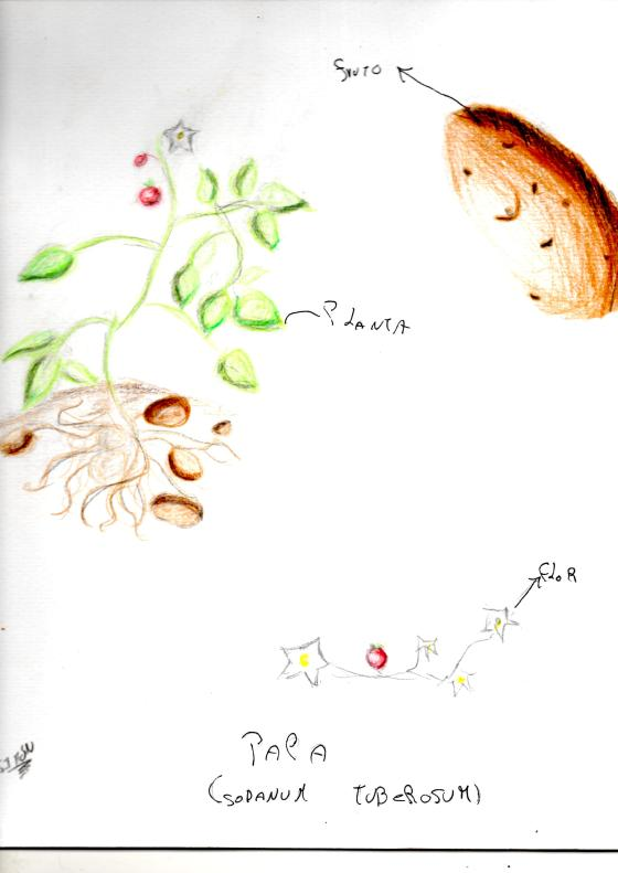 esnobgourmet_ilustracion_papa_cuaderno_gastrobotanico