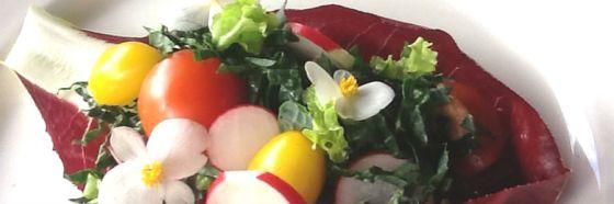 esnobgourmet-recomendaciones-chef-holistica-mejorar-calidad-de-vida