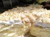 4 tortas venezolanas con frutas a las que siempre vale la penavolver